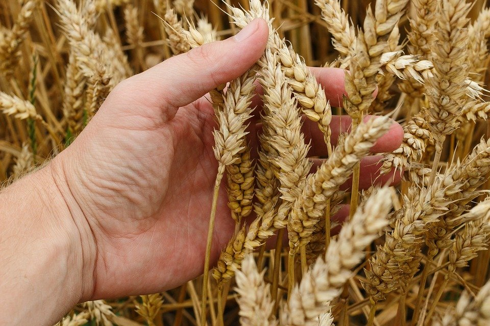 3 tecnologias que vão revolucionar o agronegócio
